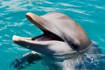 ocean-world-dolphin-swim-in-puerto-plata thumbnail