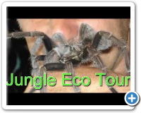 Jungle Eco Tour, Dominicaanse Republiek